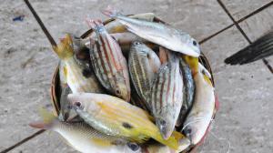 la-sci-sn-plastic-debris-fish-markets-20151016-001